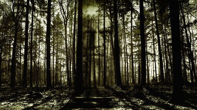 tvář v temném lese
